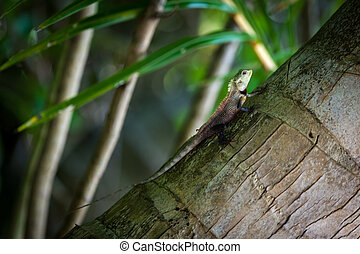 Small lizard on a palm tree