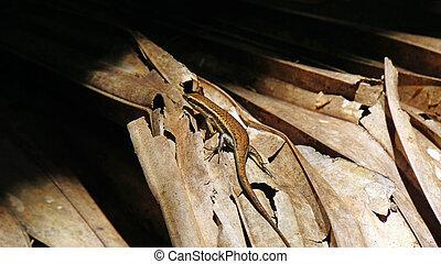 lizard - small lizard on palm leaf