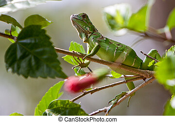 Small lizard sitting on a branch