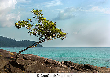 Small lonely tree by the ocean