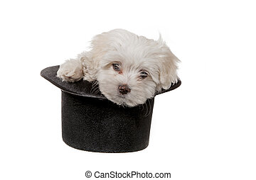 puppy in a hat