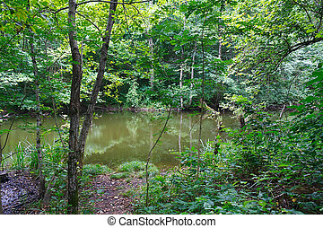 Small marvellous lake among southern forests - Small...