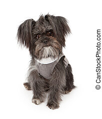 Small Mixed Breed Dog Wearing Sweater