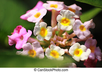 small mixed color flower close up