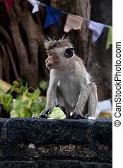 Small monkey portrait
