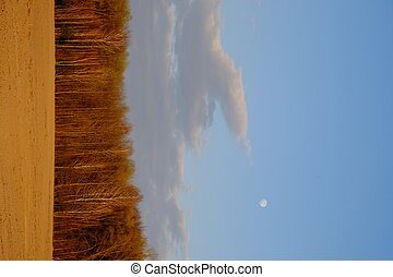 Small moon in the evening sky over the forest. Landscape.