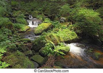 small mountain brook with stones and green vegetation