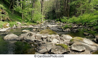 Small mountain river in summer