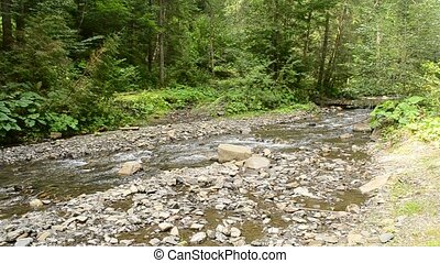 Small mountain river with lush green forest in Carpathians