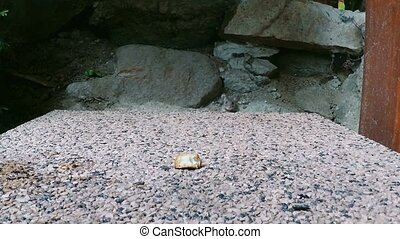Small mouse outdoor eating rest of