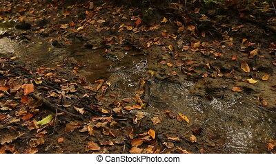 Small muddy creek, stream.
