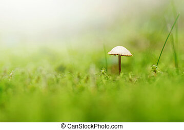 Small mushroom in green moss and grass