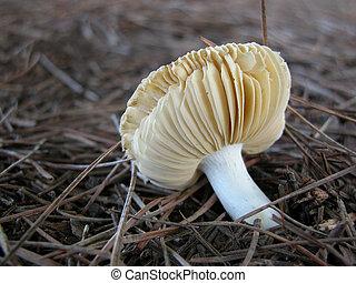 small mushroom on pine