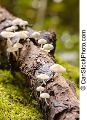 Small mushrooms in rain forest.