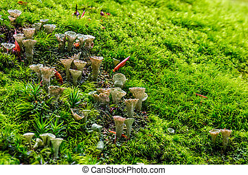 small mushrooms in the moss closeup. beautiful but poisonous...