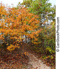 Small oak trees in autumn colors