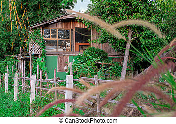 Small old house in  the rain forest .