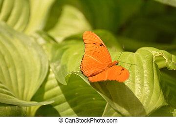 Small orange Julia Butterfly in the wild - Wild orange Julia...