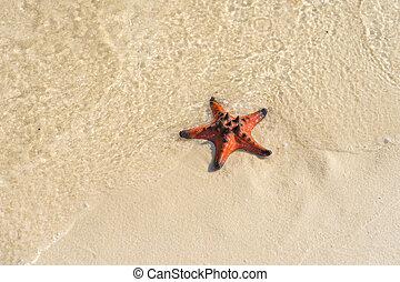Small orange starfish on the wet white sand