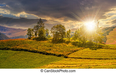 small orchard on a grassy rural field at sunset