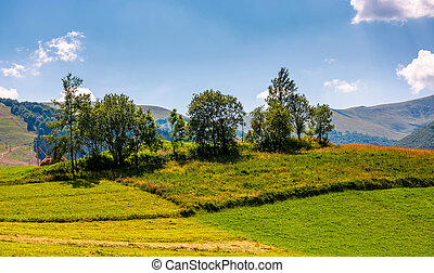 small orchard on a grassy rural field. lovely summer scenery...