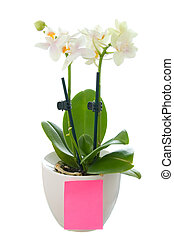 Small orchid in flowerpot with a blank paper
