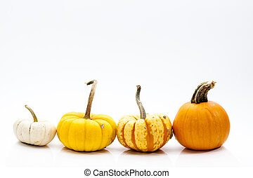 Small Ornamental Gourds for Autumn