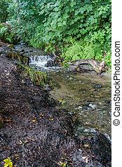 Small Pacific Northwest Stream 2