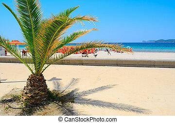 small palm tree by Alghero shore