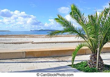 small palm tree by Alghero shoreline