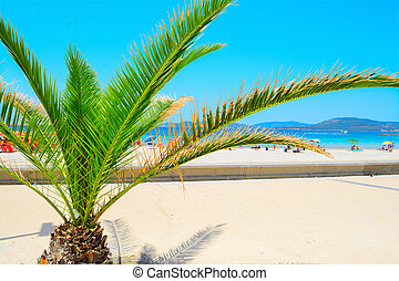 small palm tree by the sea in Alghero