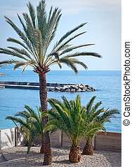 small palm trees in french riviera