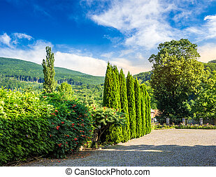 small park in mountains - small park with conifer trees and...