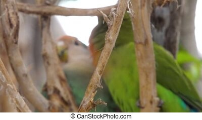 small parrot in the national park - small colored parrot in...