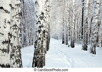 small path in winter birch wood alley