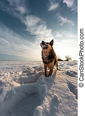 Small pet on a snowy field in winter. Dog in the snow
