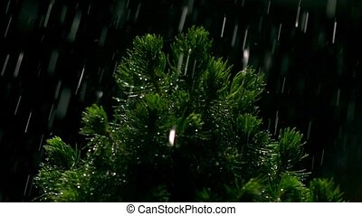 Small pine and falling drops of water at night. Super slow...