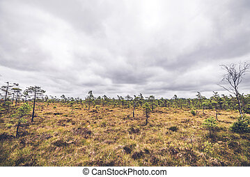 Small pine trees in a prairie landscape