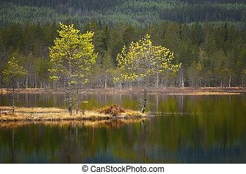 small pine trees in tarn