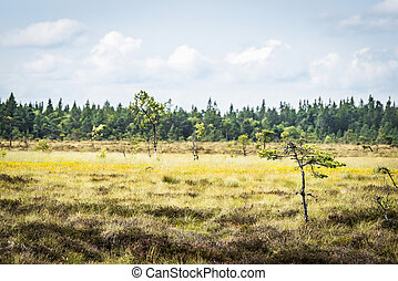 Small pine trees on a dry field with yellow flowers