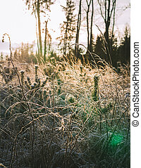 Small pines and grass are covered with frost