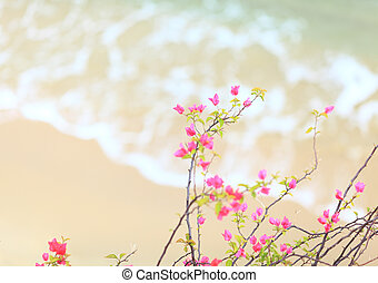 Small pink azalea with sandy beach background