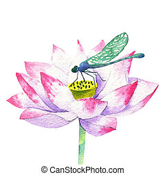 small pink blossom of lotus watercolor drawing