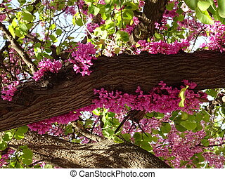 Small Pink Blossom on a Spring Tree