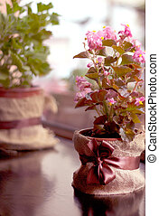 Small pink flowers in a pot
