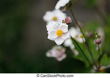 Small Pink Flowers with Blurred Background in a Garden