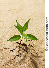 breaking out - small plant breaking out from cracked soil