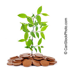 Small plant growing from coins isolated on white background.