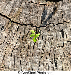 Small plant growing on tree stump. - Small plant growing on...