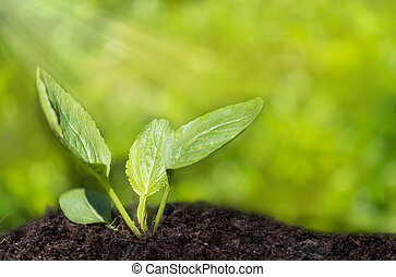 Small plant growing out of soil, agriculture